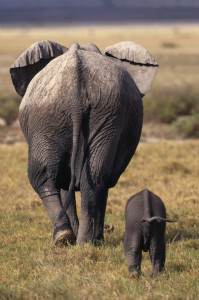 Masai Mara National Reserve, Kenya --- Mother and Baby Elephant --- Image by © Royalty-Free/Corbis